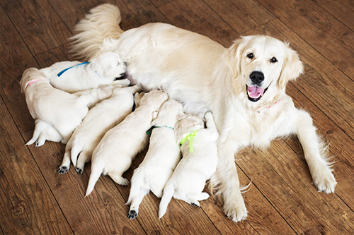 6 Essential Ways of Puppy Proofing Your Home